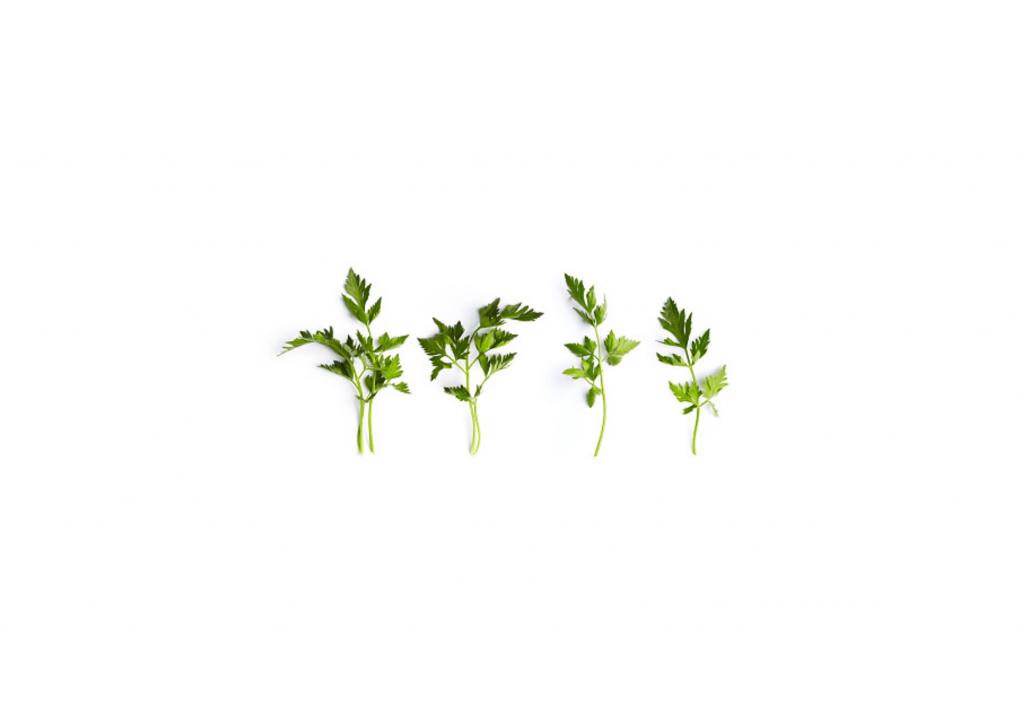 Organic Parsley Leaf Powder